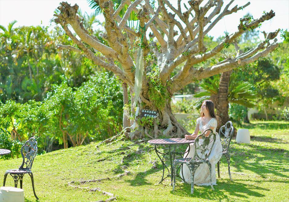 ハーブ・ガーデンPANA石垣島がじゅまるの大木フォトウェディング