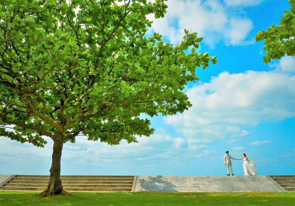 ホテル・ロイヤル・マリン・パレス石垣島緑深い大木を望むフォトウェディング