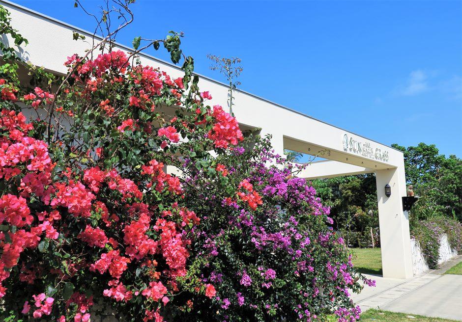 サングリーングラスリゾート/入口にはブーゲンビリアの花々が咲き乱れています